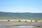 Ngorongoro Landscape and Zebras